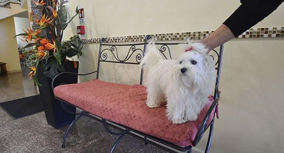 Hotel Bellaria Pet friendly Animali