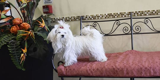 Hotel Villa Aurora Pet